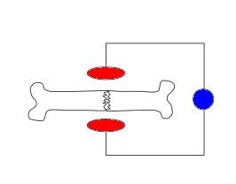 circuito-osso