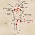 large-intestine